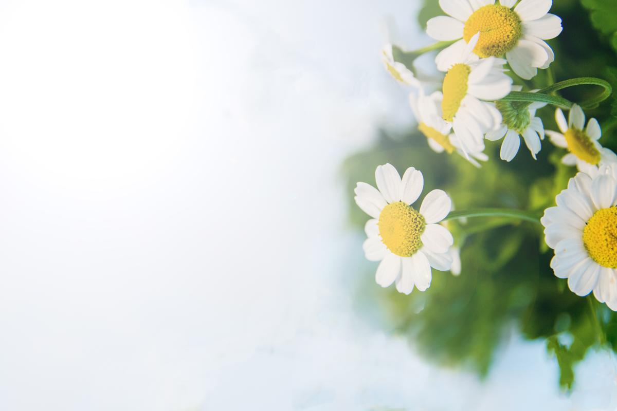 bio-floralni-vodi-bio-laikova-voda-alteia-organiks-malka-koritsa